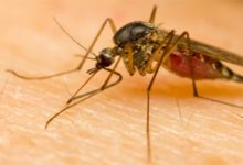 Photo of Bayer launches Aqua K-Othrine®for mosquito management