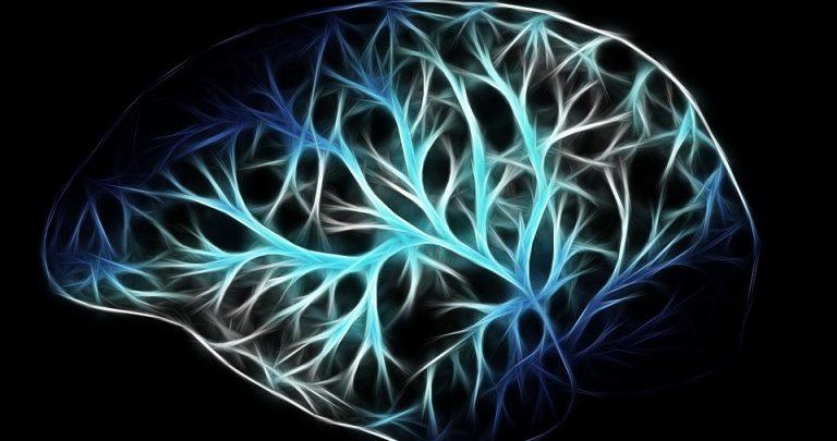 brain neurons neurology