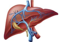 Photo of Surprising players in acute liver failure point to potential treatment