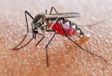 Photo of WHO calls for reinvigorated action to fight malaria