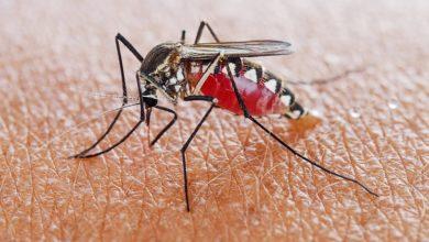 Photo of WHO recommends groundbreaking malaria vaccine for children